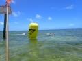 Yellow finish buoy
